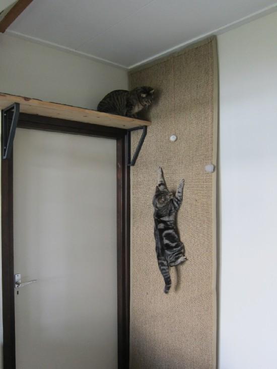 griffoir pour chat fait maison ventana blog. Black Bedroom Furniture Sets. Home Design Ideas