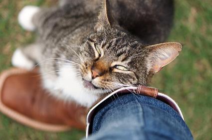 42-cat-hater-affection-DT-425km071411.jpg