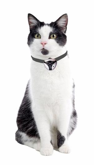 Caméra embarquée pour chat