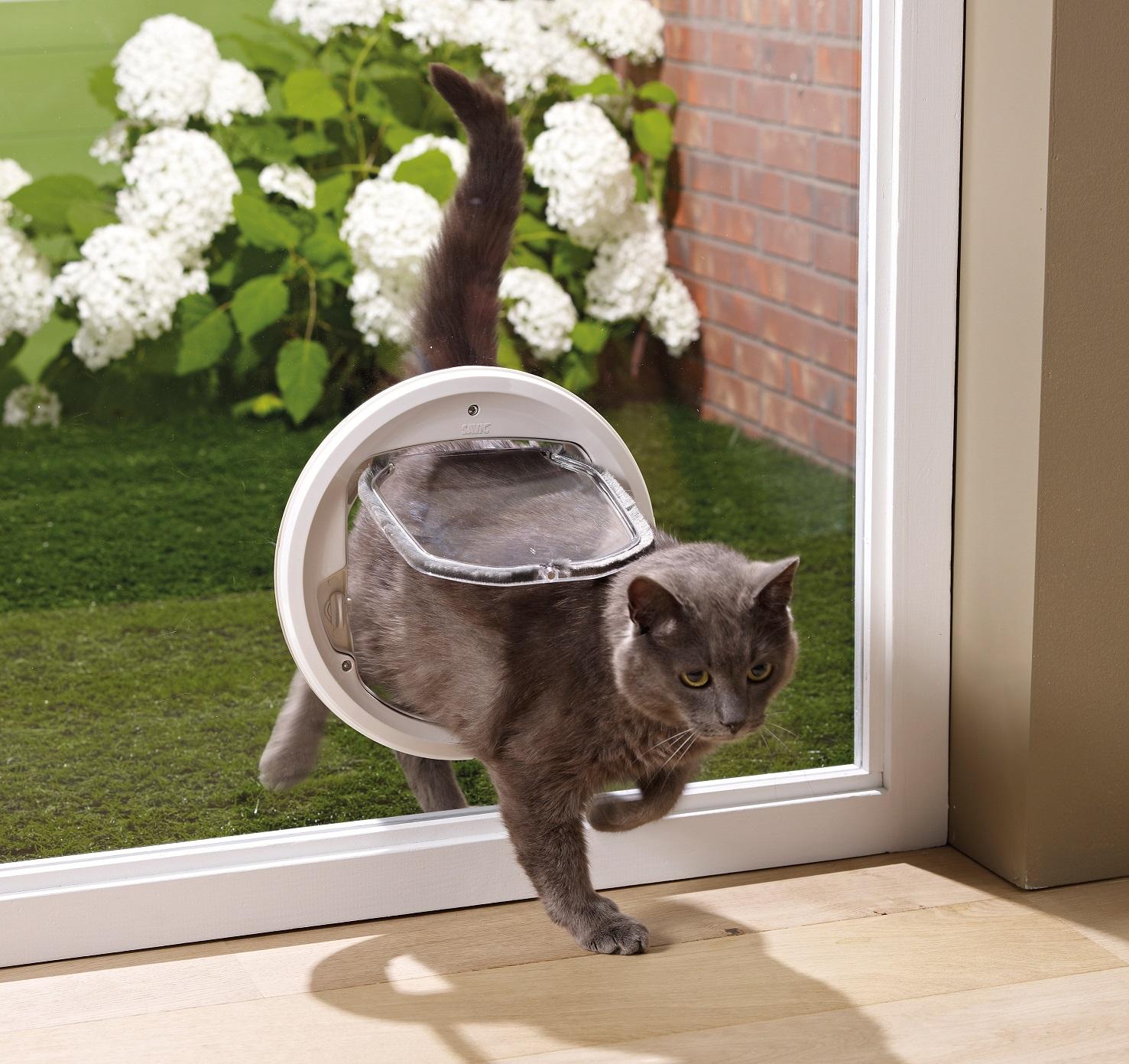 Salle De Bain Attenante Translation ~ Comment Am Nager Mon Studio Avec Mon Chat Cat Apart