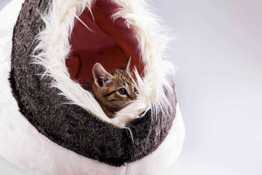 chatons dans une valise.jpg