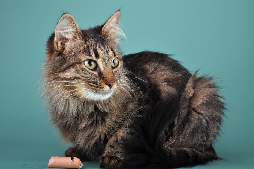 caviarpour chat a la bonite