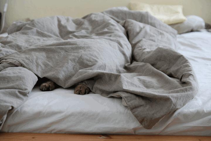 Ce chat dort comme un loir la nuit et ne réveille jamais ses maîtres en miaulant grâce aux conseils de CAT APART!