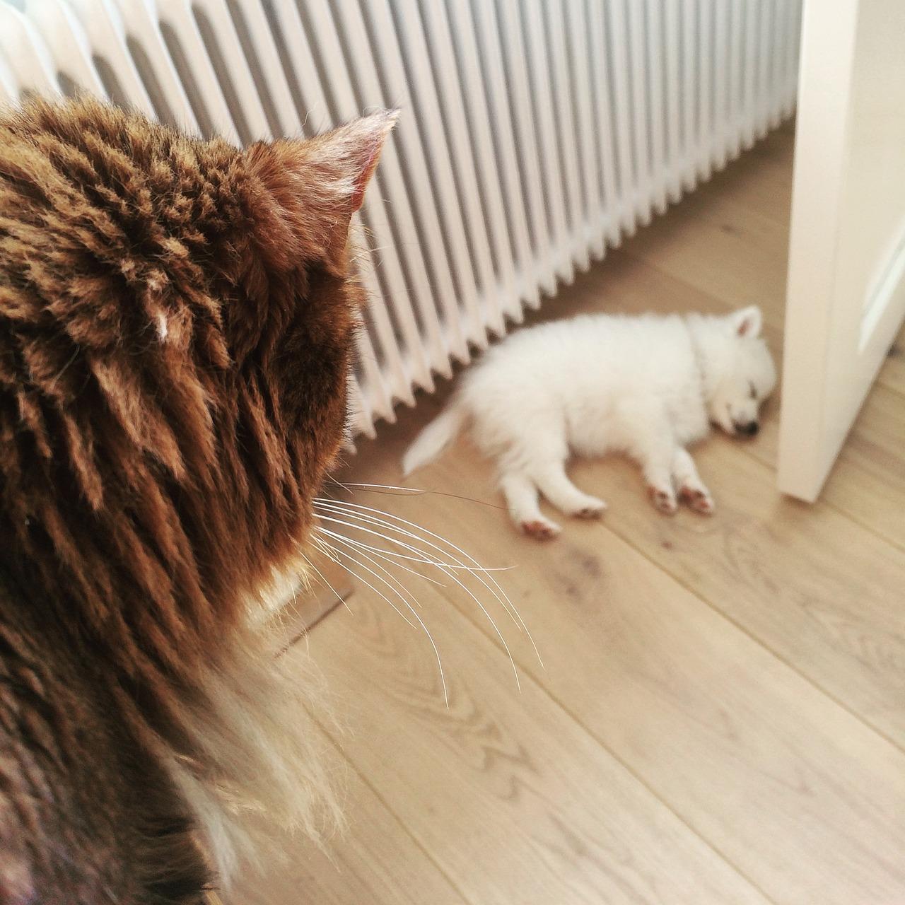 Chat qui regarde un chiot dormir