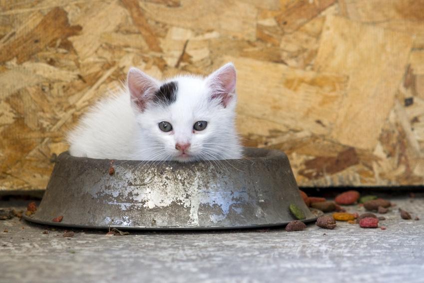 applaws croquettes pour chaton sans céréales