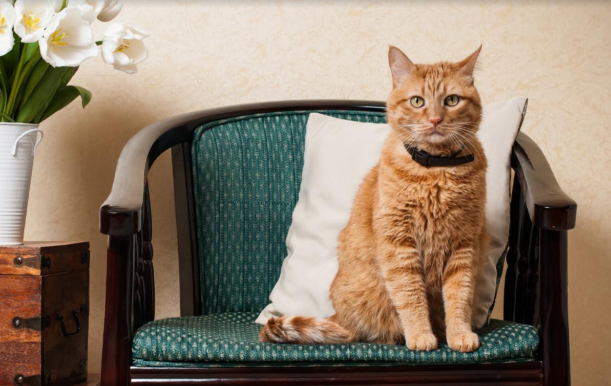 Croquettes chat stérilisé Poulet Thon Saumon 1,5 kg - CAT APART