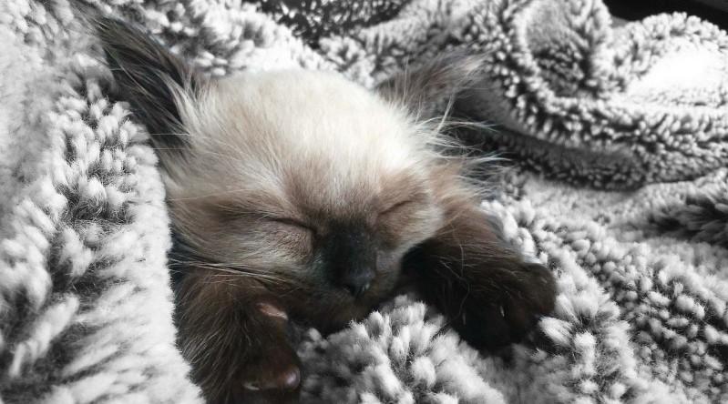 6-choses-pour-empecher-chat-reveiller-nuit.jpg