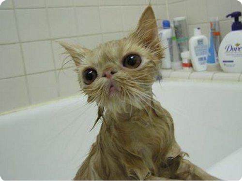Chat Qui Fait Peur mon chat n'aime pas l'eau mais pourquoi ?