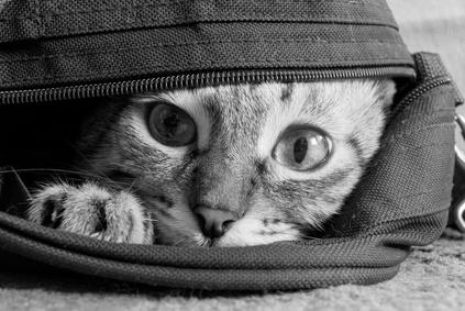 sacs de transport